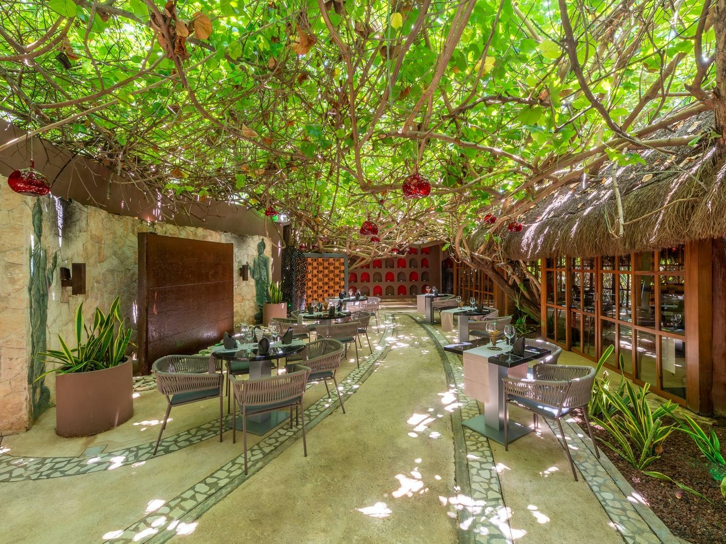 outdoor diningw with overhanging tree brances