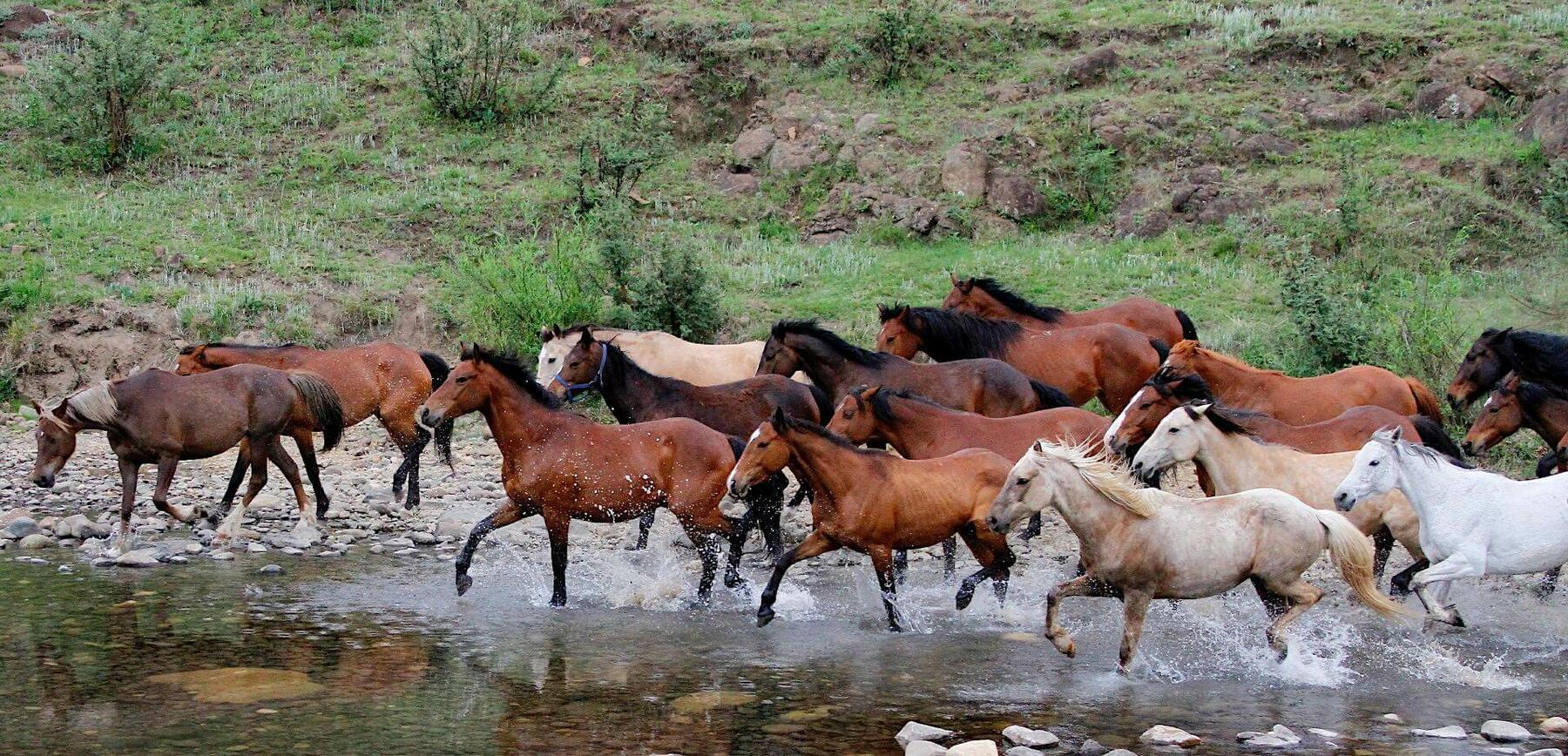 Bushman's Nek Horse Riding Horses Running Through A River