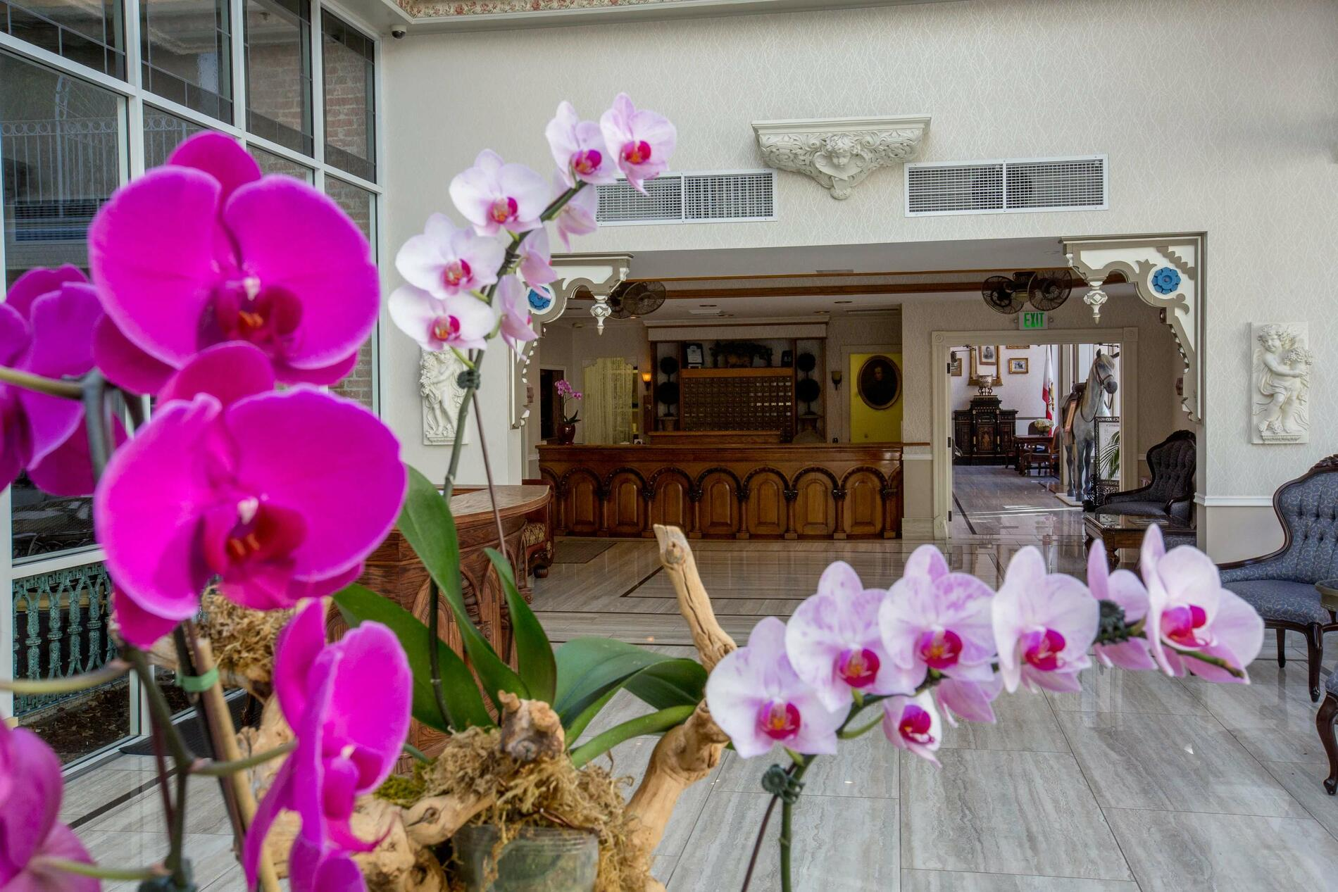Orchids in lobby