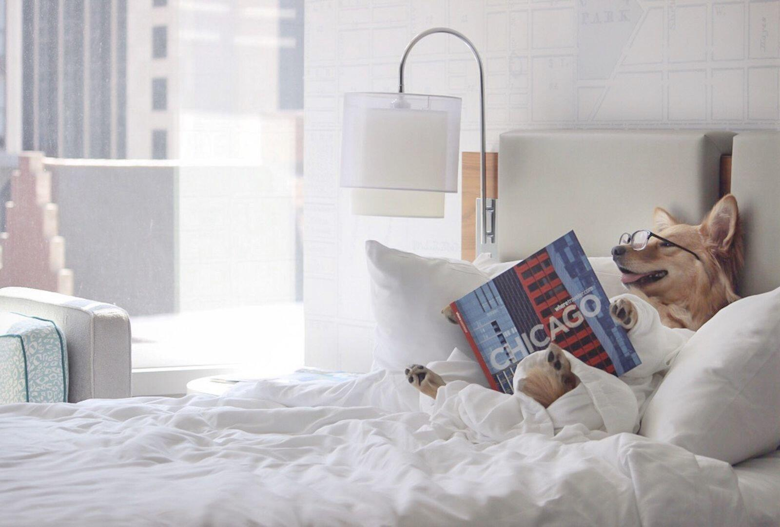 Milo Reading in Bed at the Kinzie