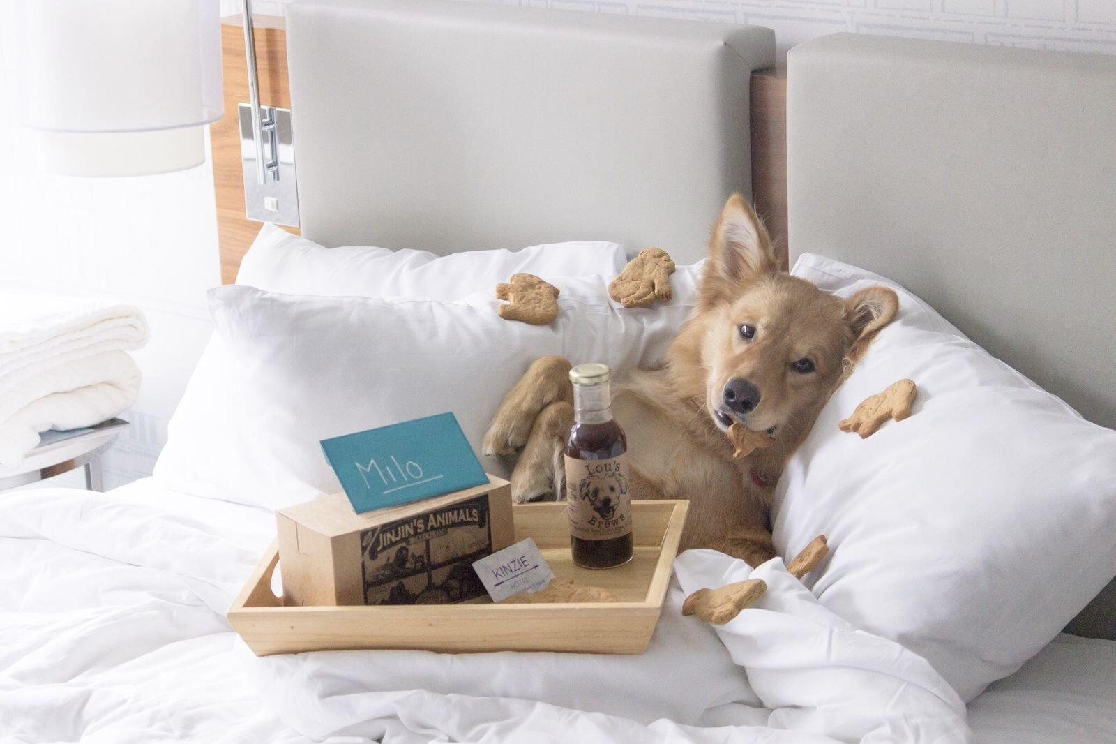 Milo with treats in bed at the Kinzie