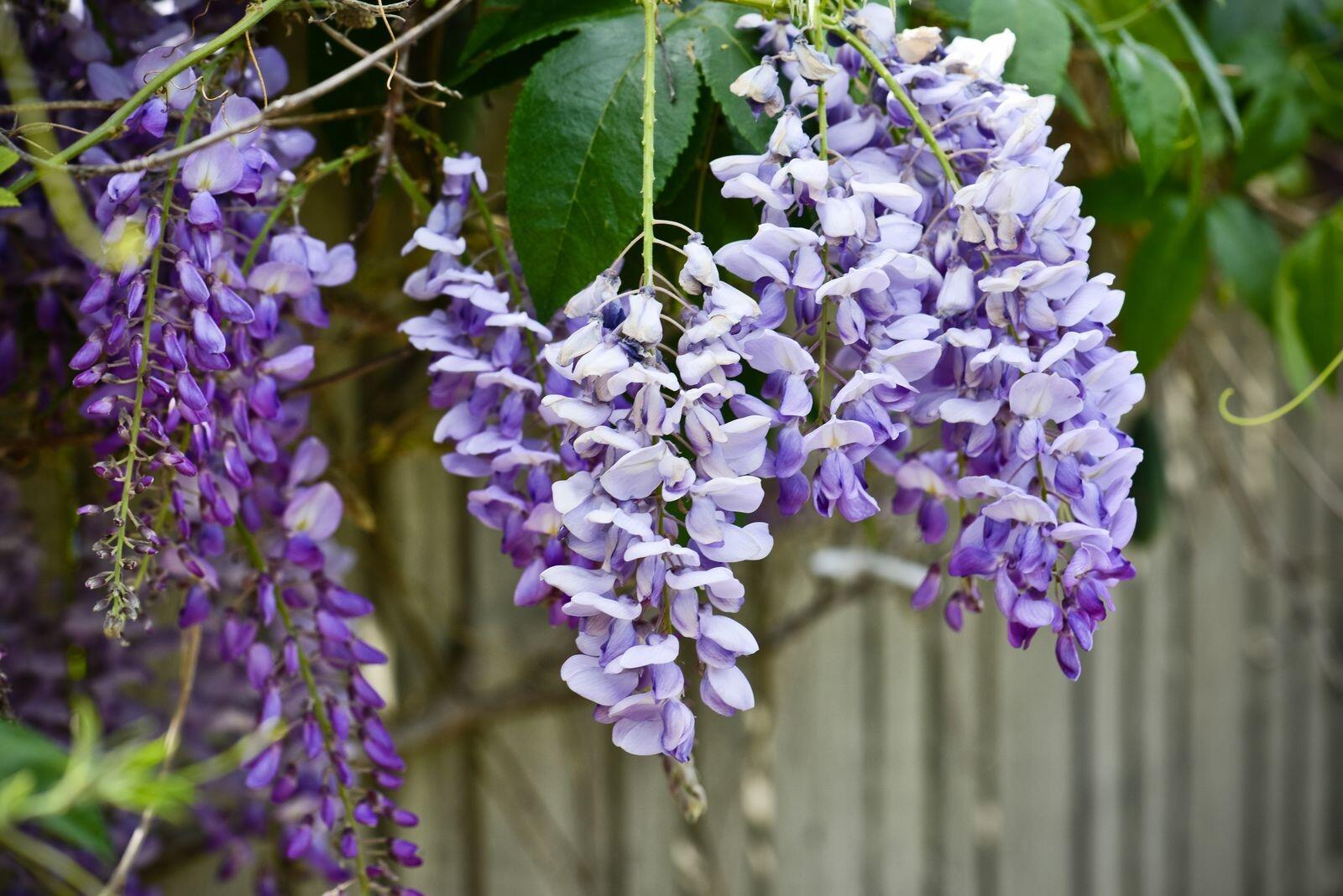 Cambria, CA flowers