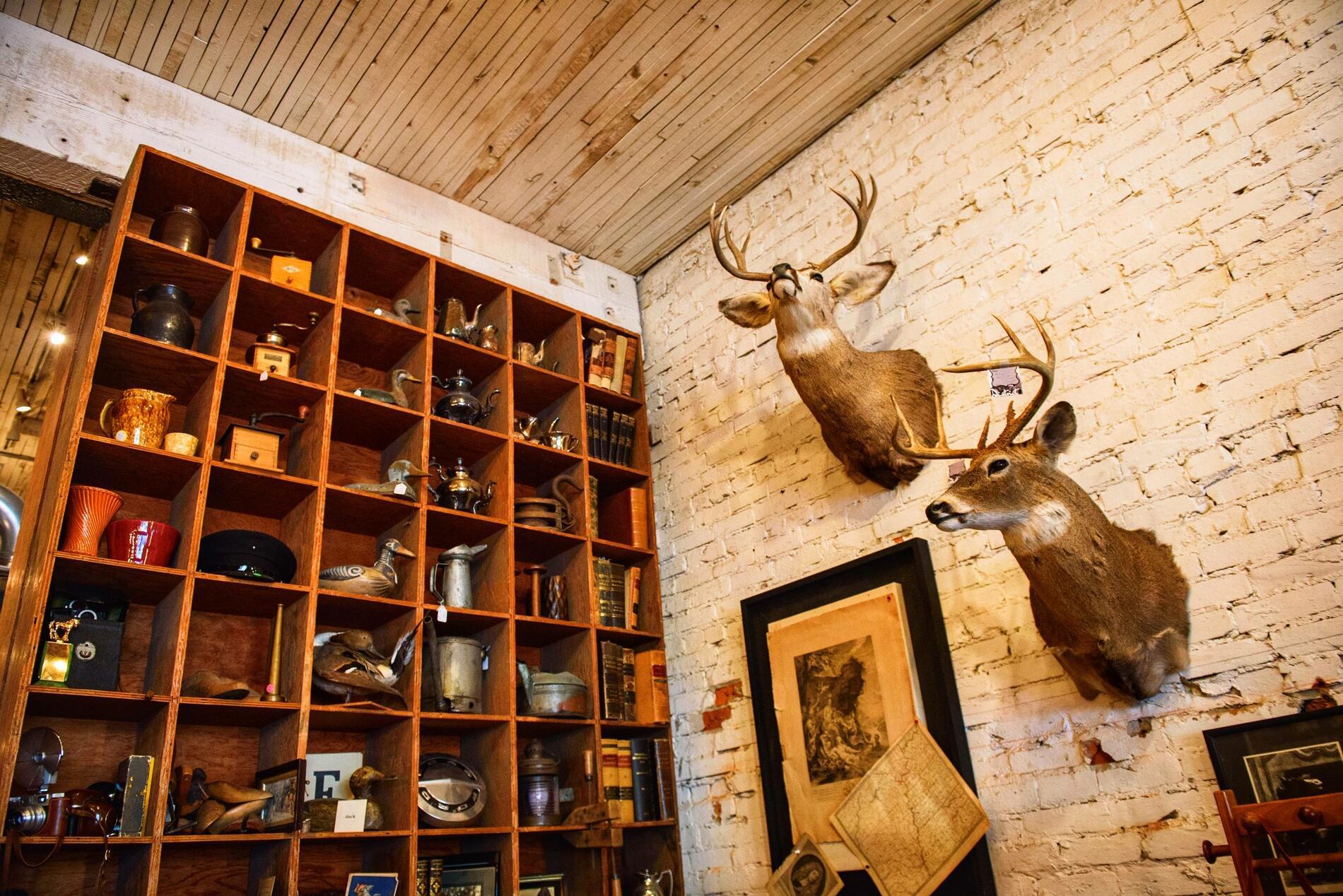 Deer heads in antique shop