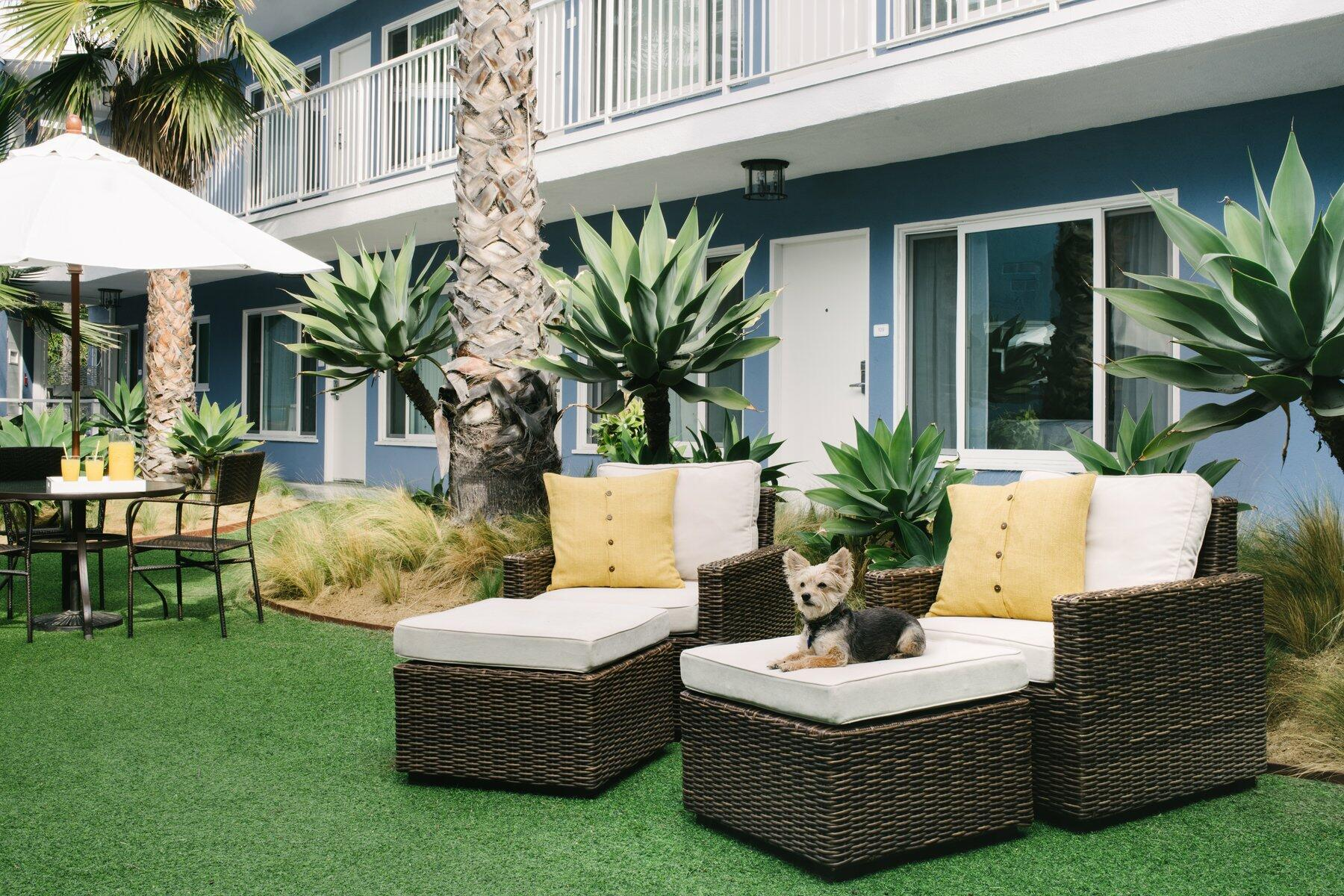Grassy courtyard with plush chairs and small dog