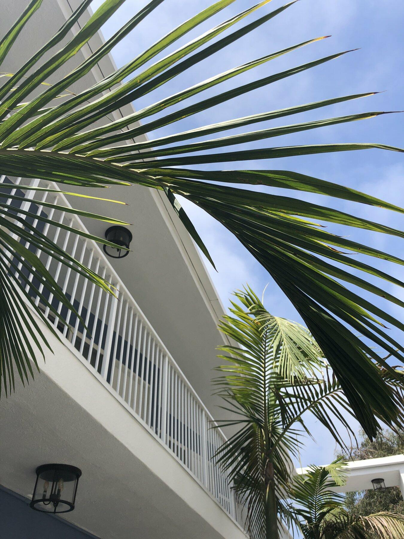 Photo of hotel balcony with palm trees