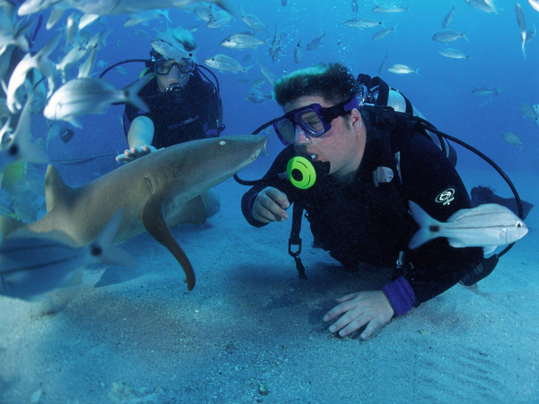 Nurse Shark Scuba Diving