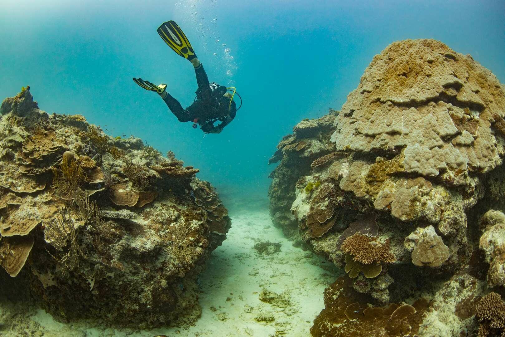 Diving at Heron Reef
