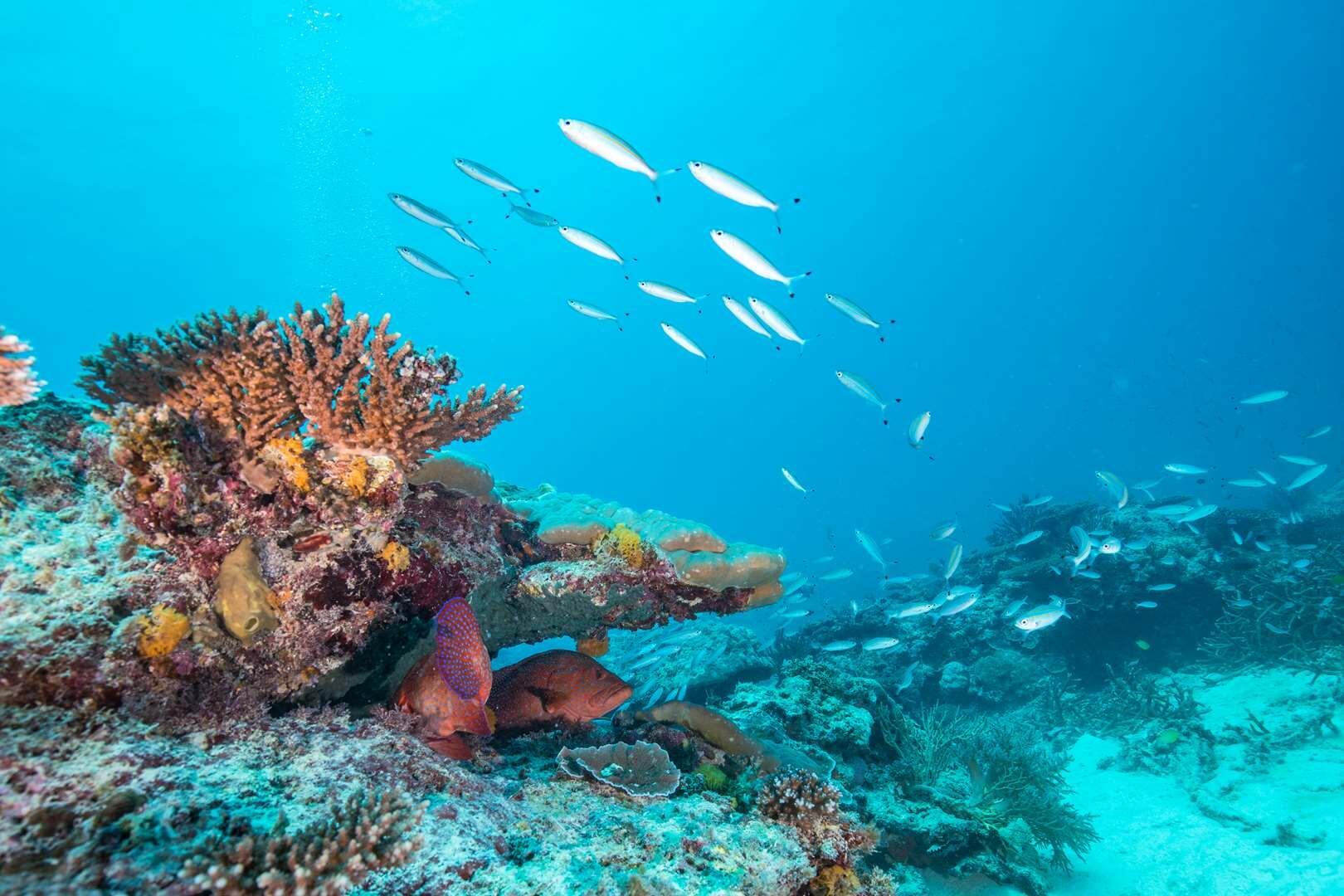 The Heron Reef
