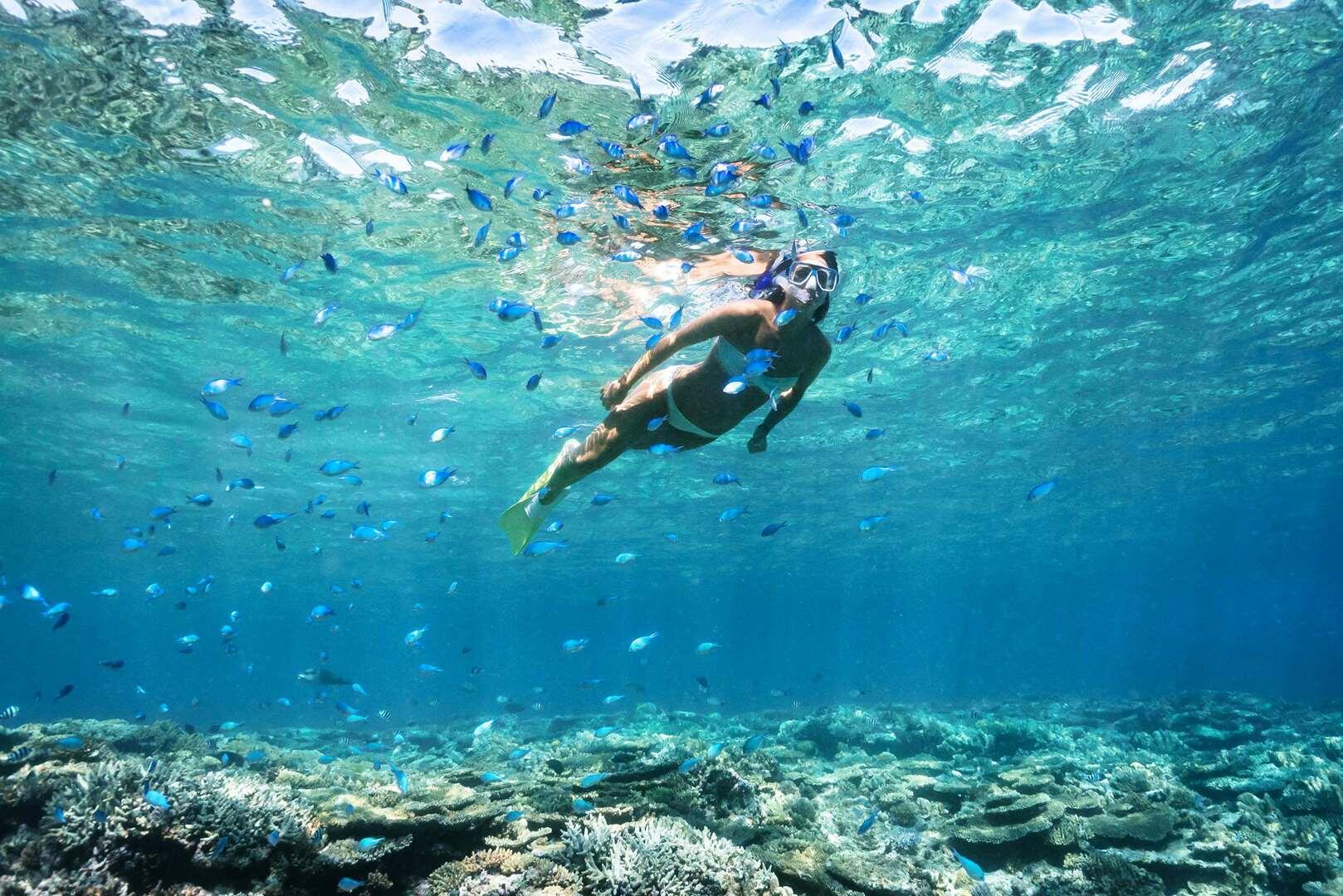 Snorkelling Activity at Heron Reef