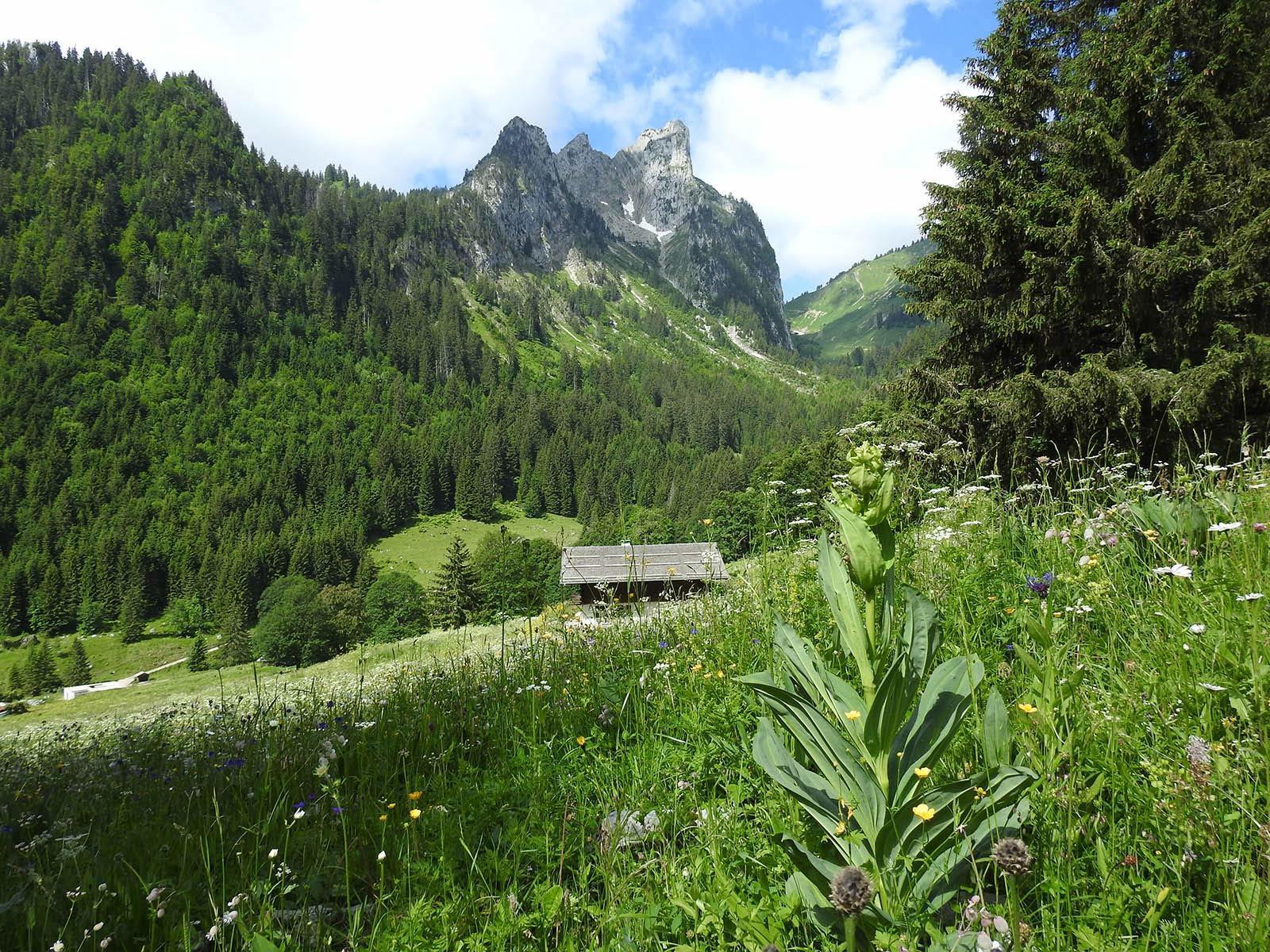 Montagne près de Les Gentianettes, The Originals Relais