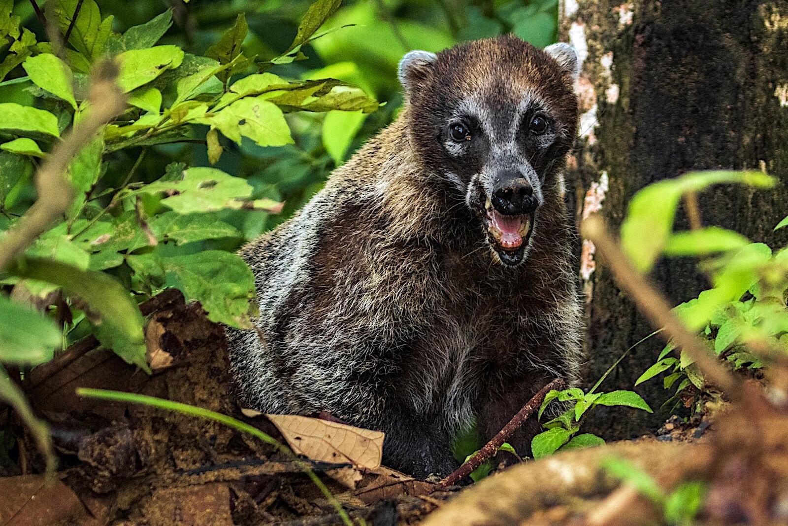 Very Surprised animal