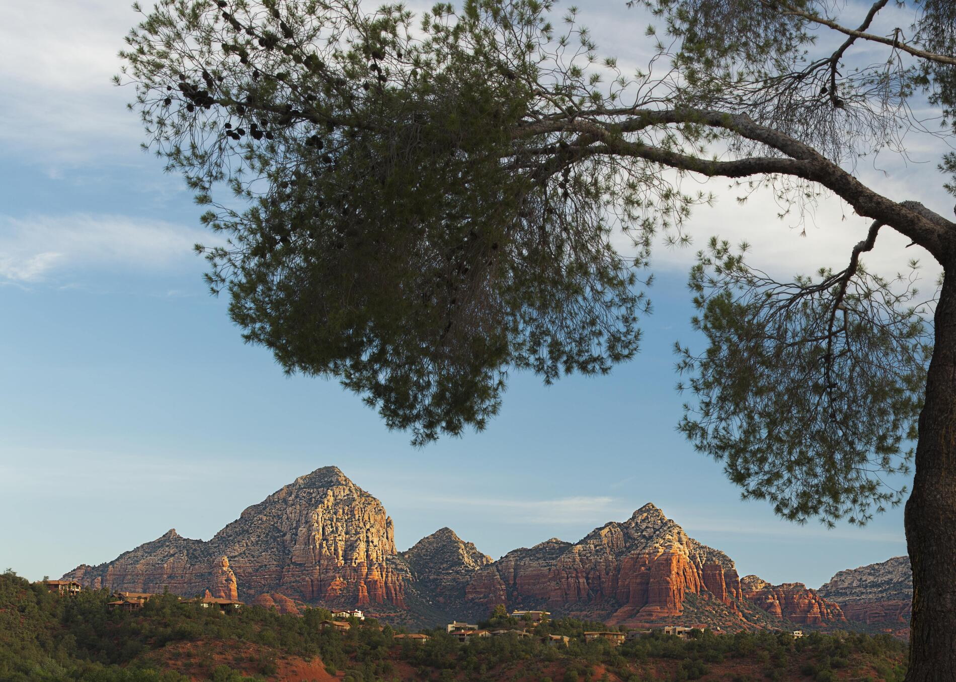 Panoramic view of the Red Rocks with tree in foreground.