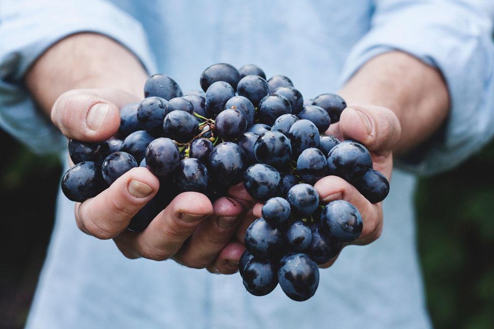 raisons des vins vendéens