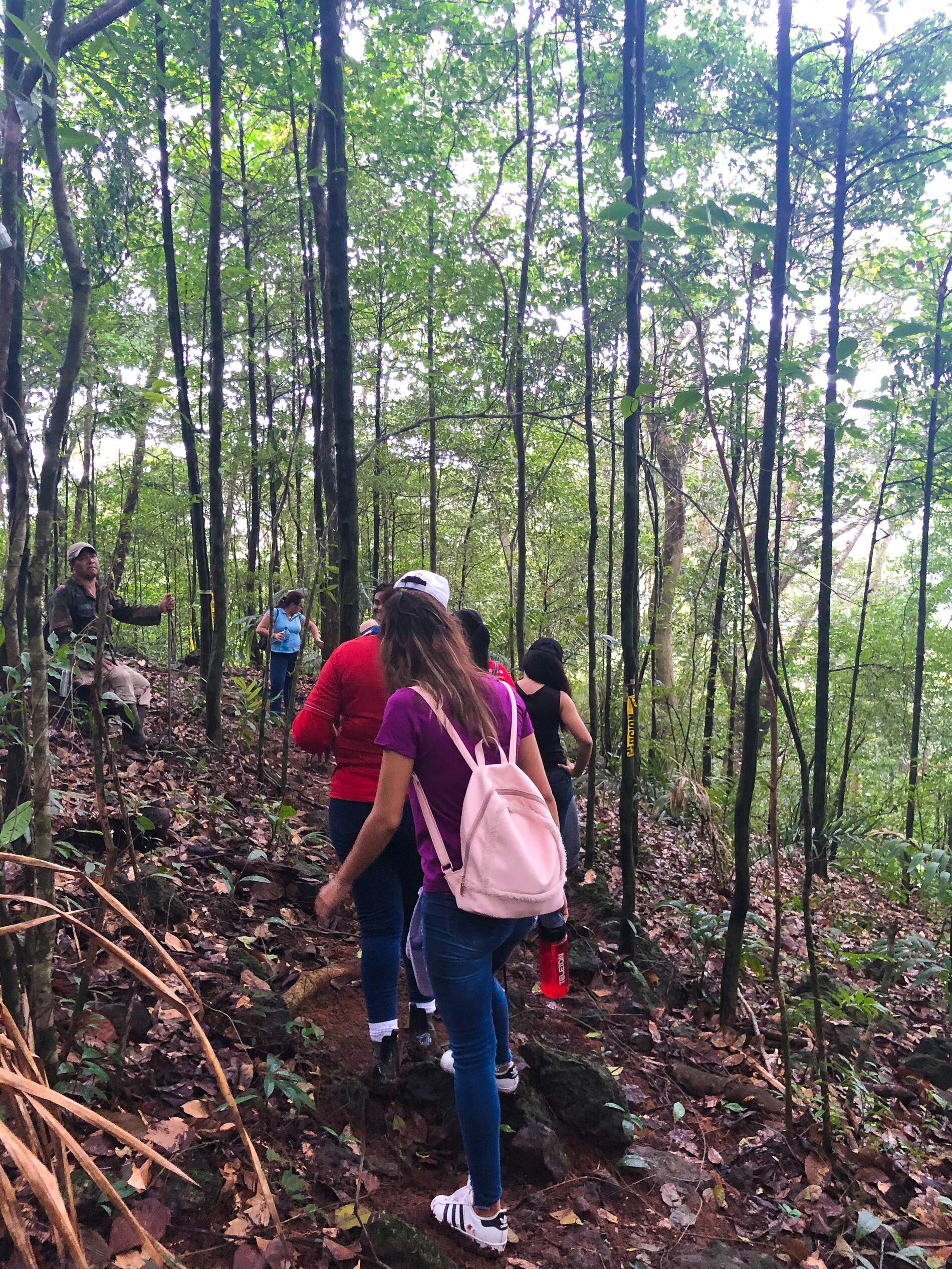 Group hiking the rainforest