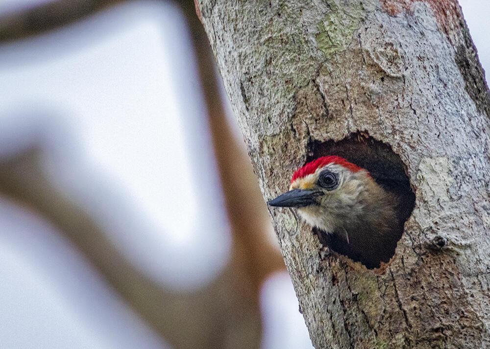 Bird inside tree