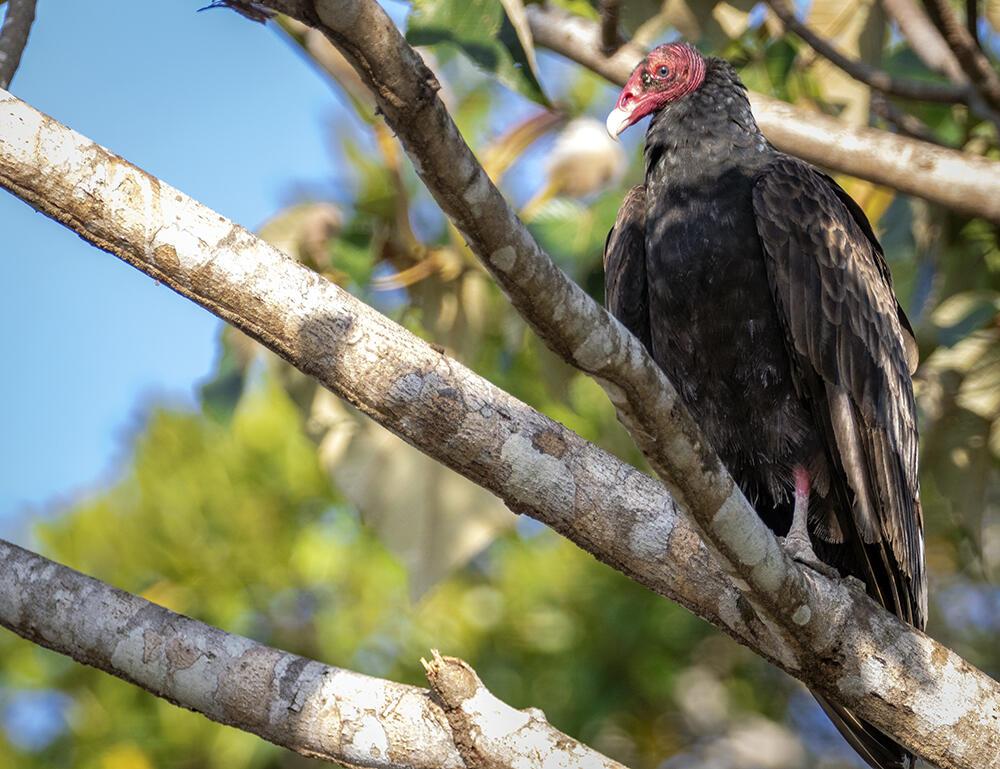 big bird on medium size branch