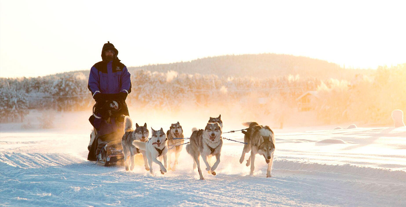 Huskies activities at Northern Lights Village in Saariselkä, Lap