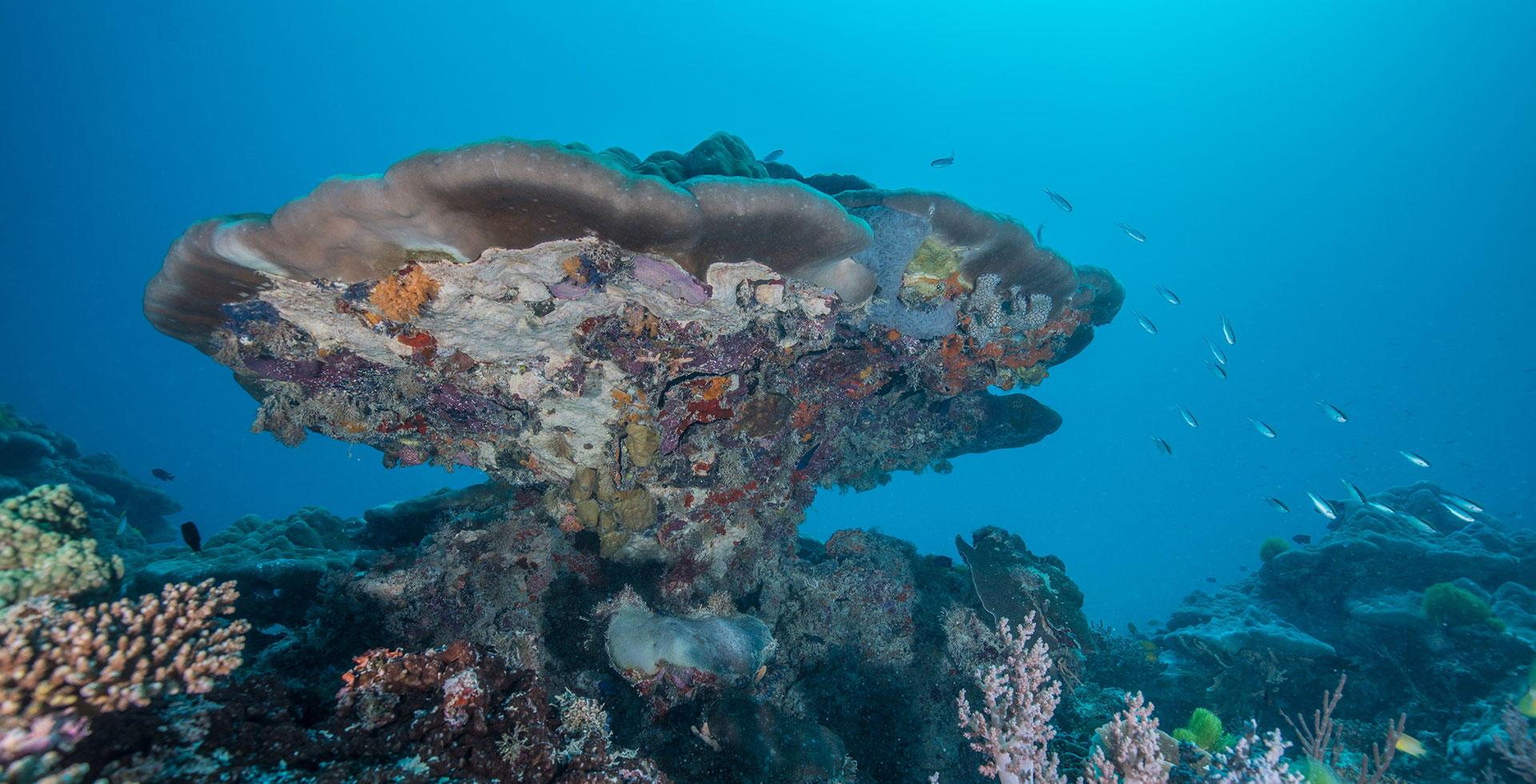 Heron Reef