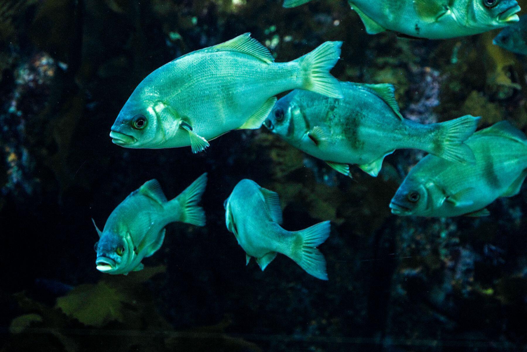 aquarium near The Monterey Hotel