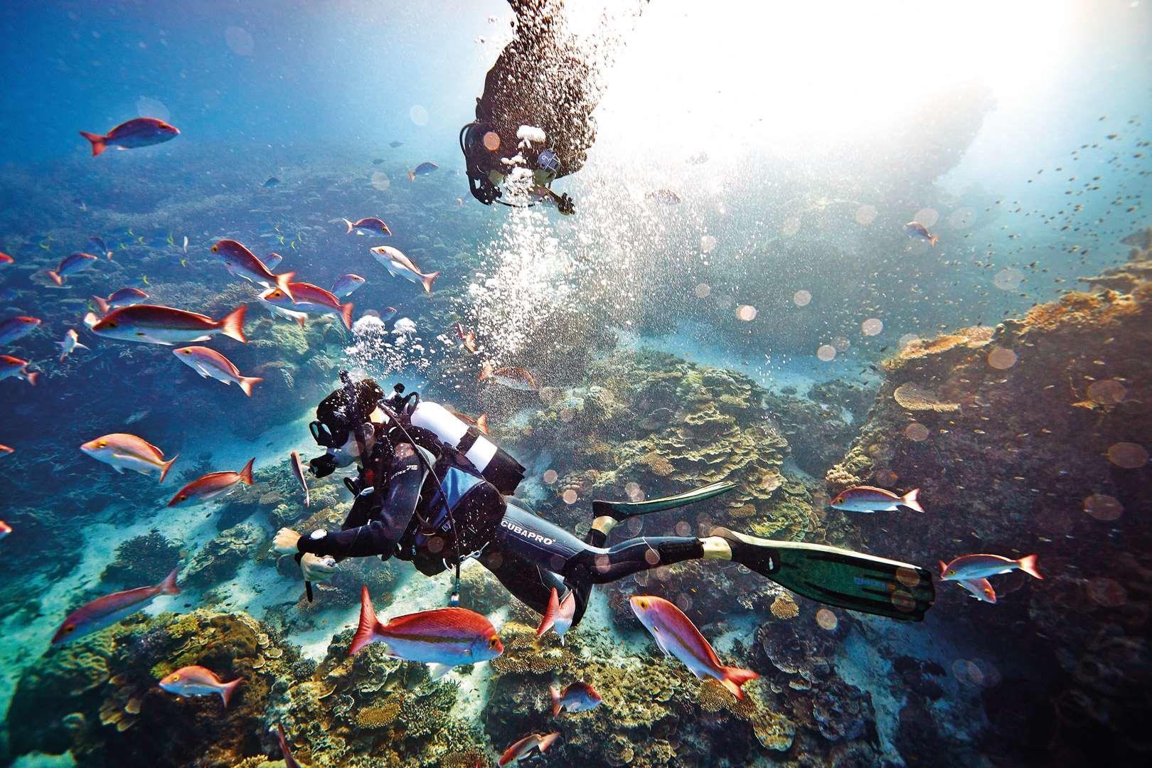 Diving at Heron Island