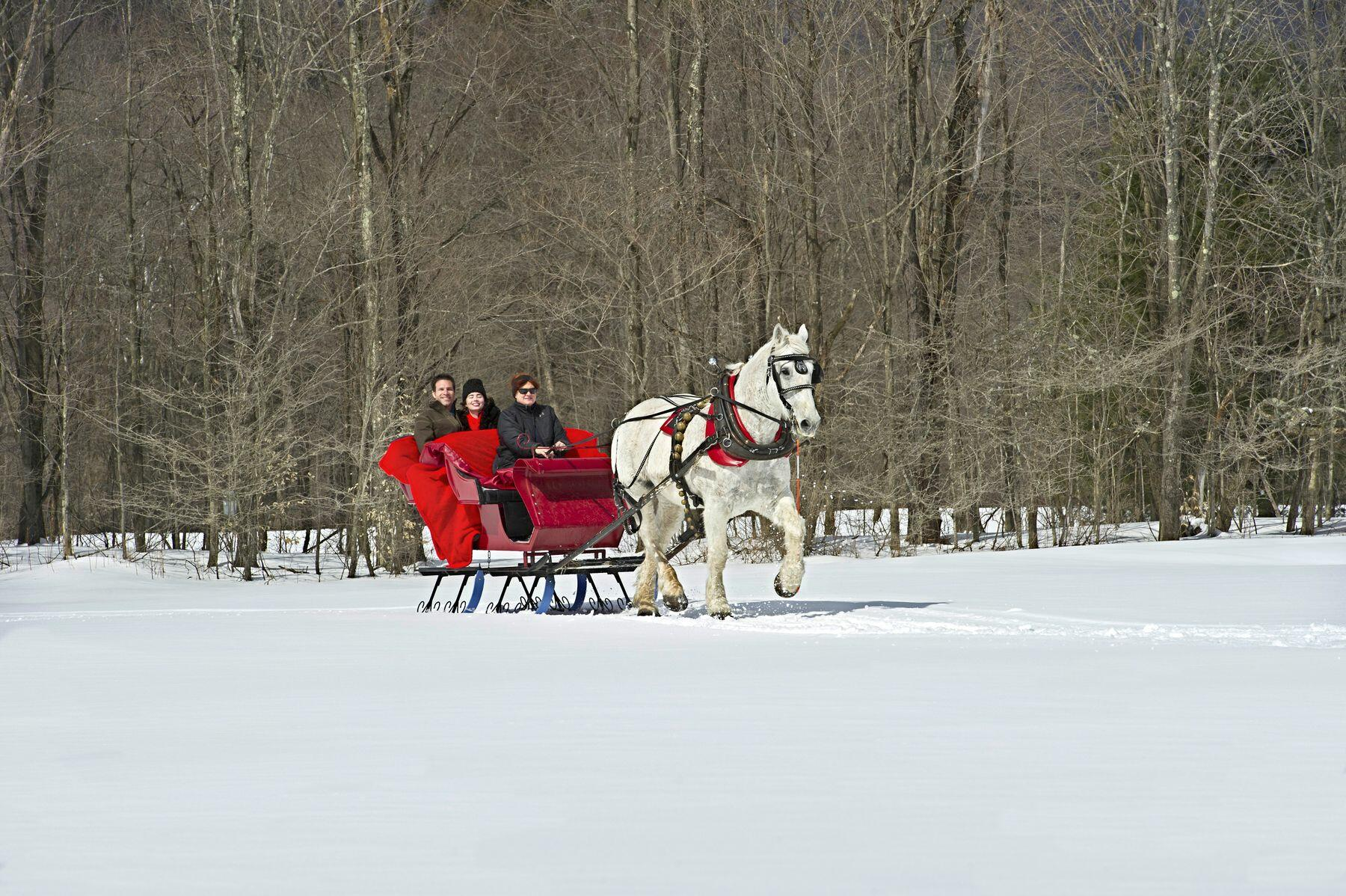 Happy couple in a horse-drawn sleigh in Vermont snow.