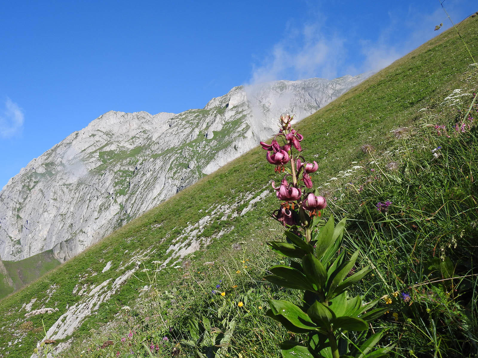 Wild Flower in the Mountain near Hotel Les Gentianettes, The Ori
