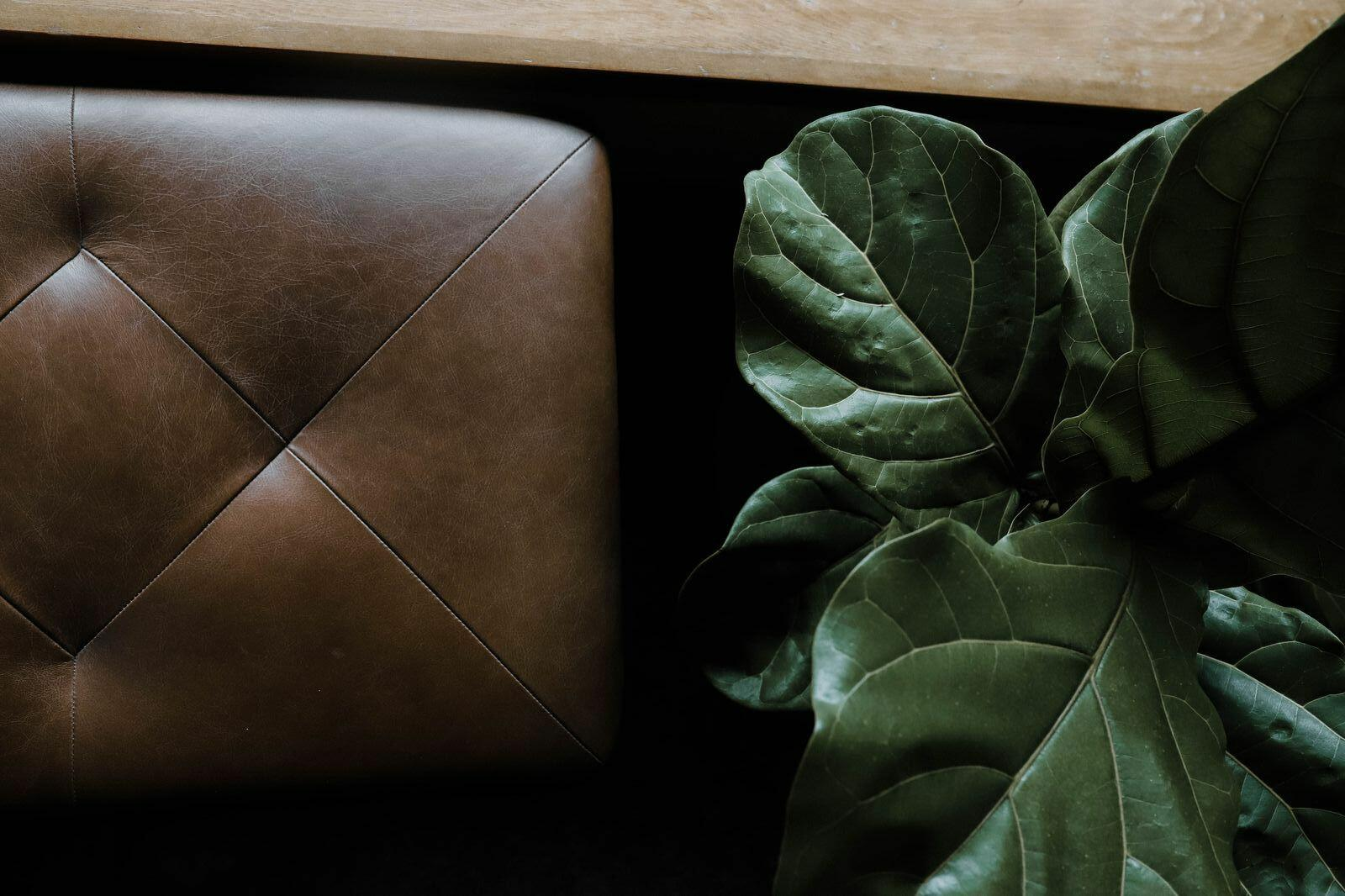 Close photo of fig plant and leather seat.