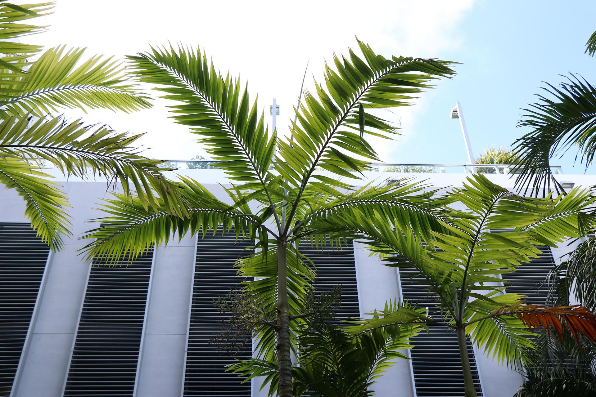 palm tree next to building