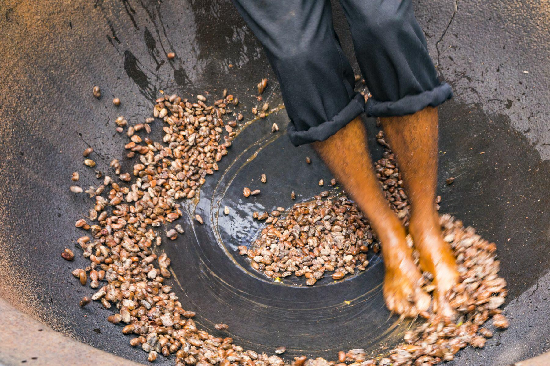 feet stepping on cocoa beans