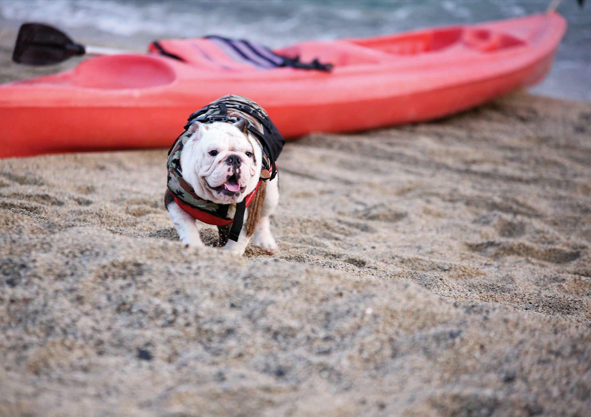 Bring your pets at Acuaverde Beach Resort