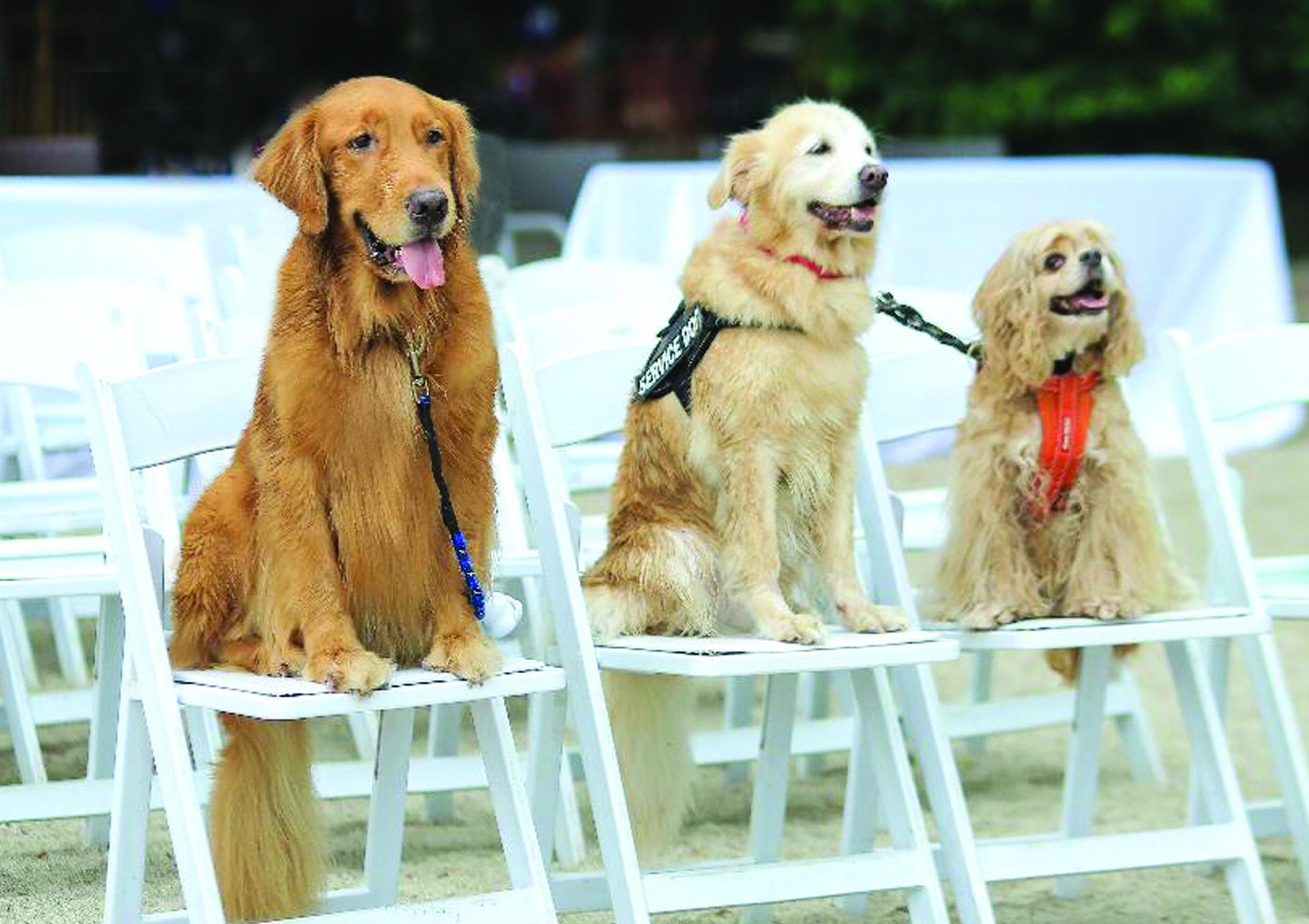 Acuaverde Beach Resort pets
