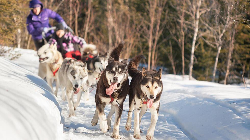 Auberge_lac_taureau_Dog_sledding_ride