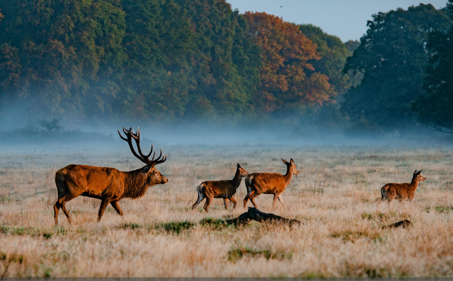 Things to do in Richmond   Richmond Park Activities