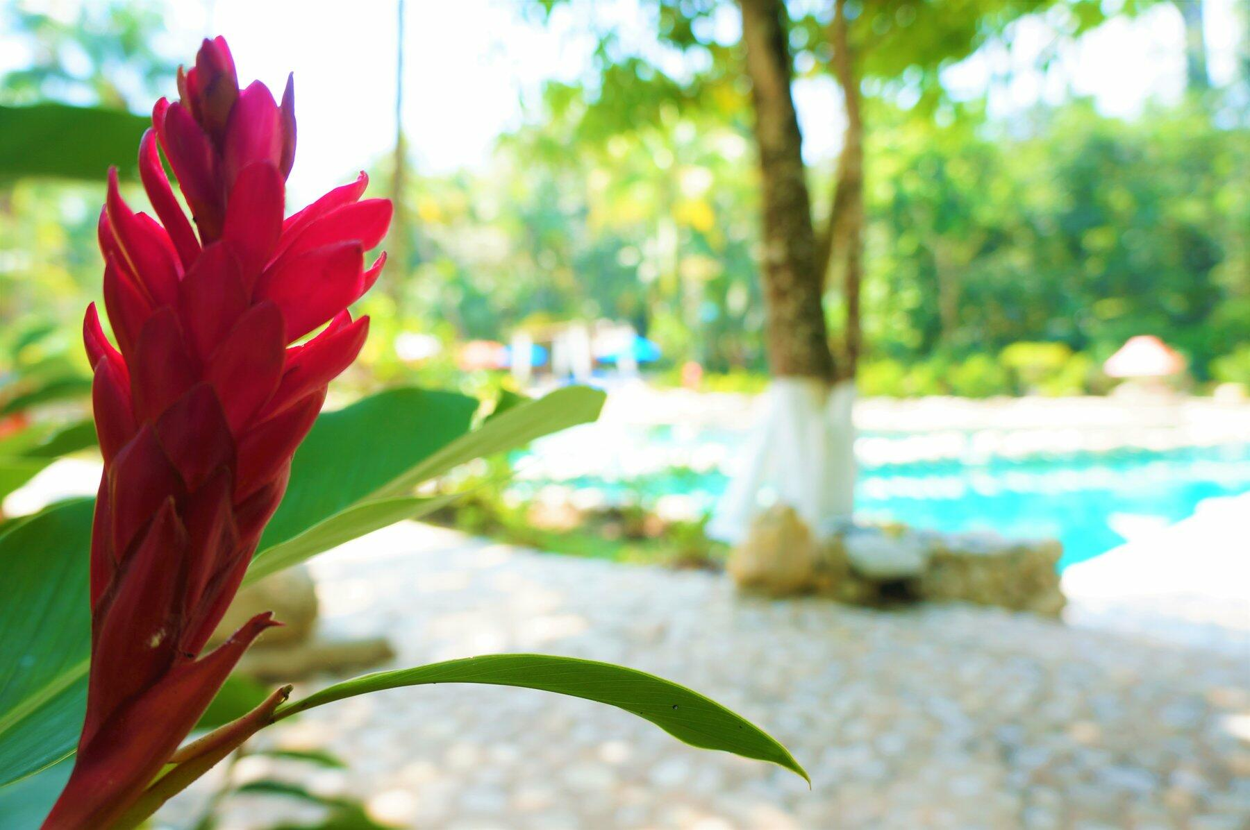 a red flower by a pool