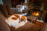 Tekarra Lodge - Pet Friendly Living Area