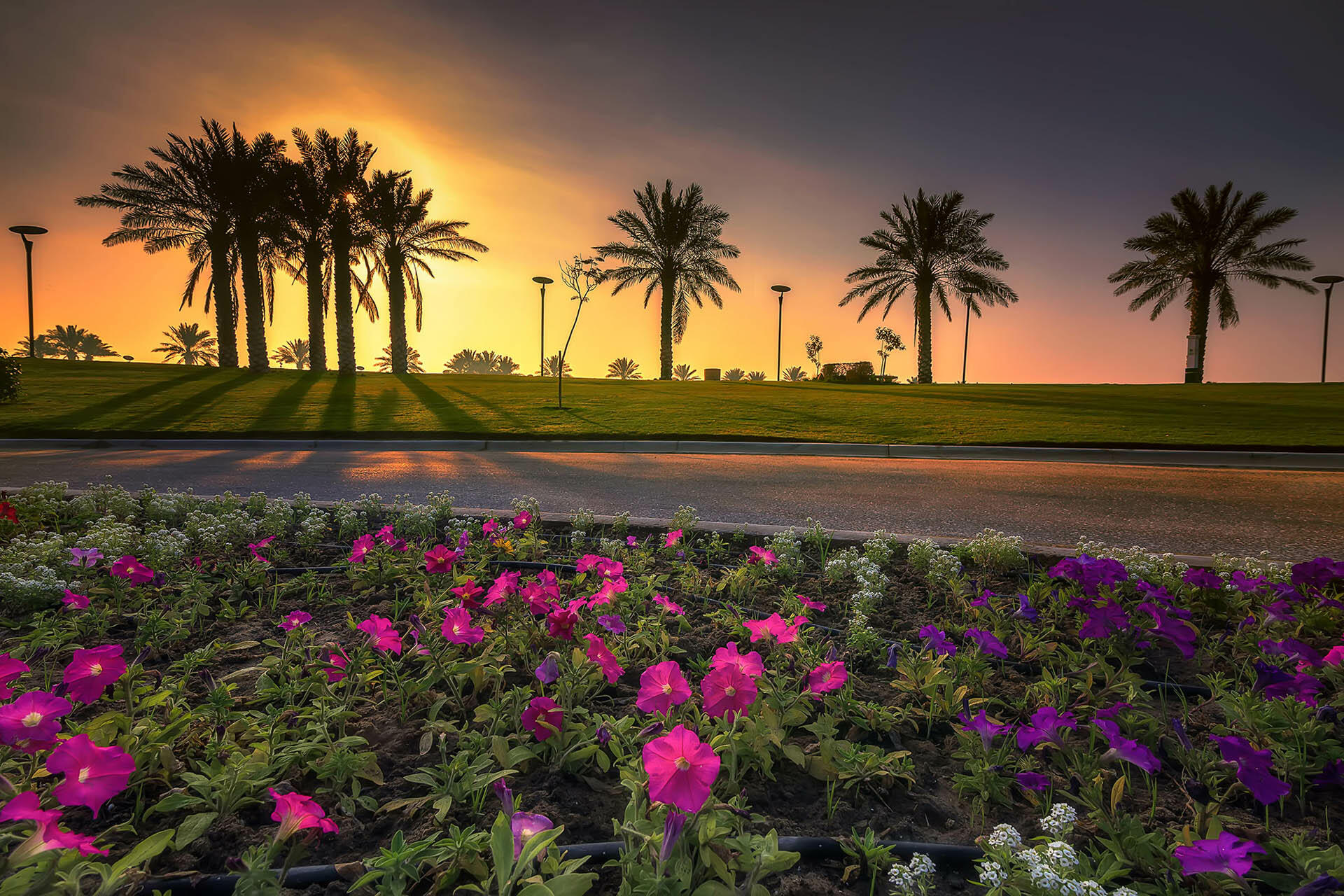 Sunrise view Modon Lake Dammam - flowers in the foreground
