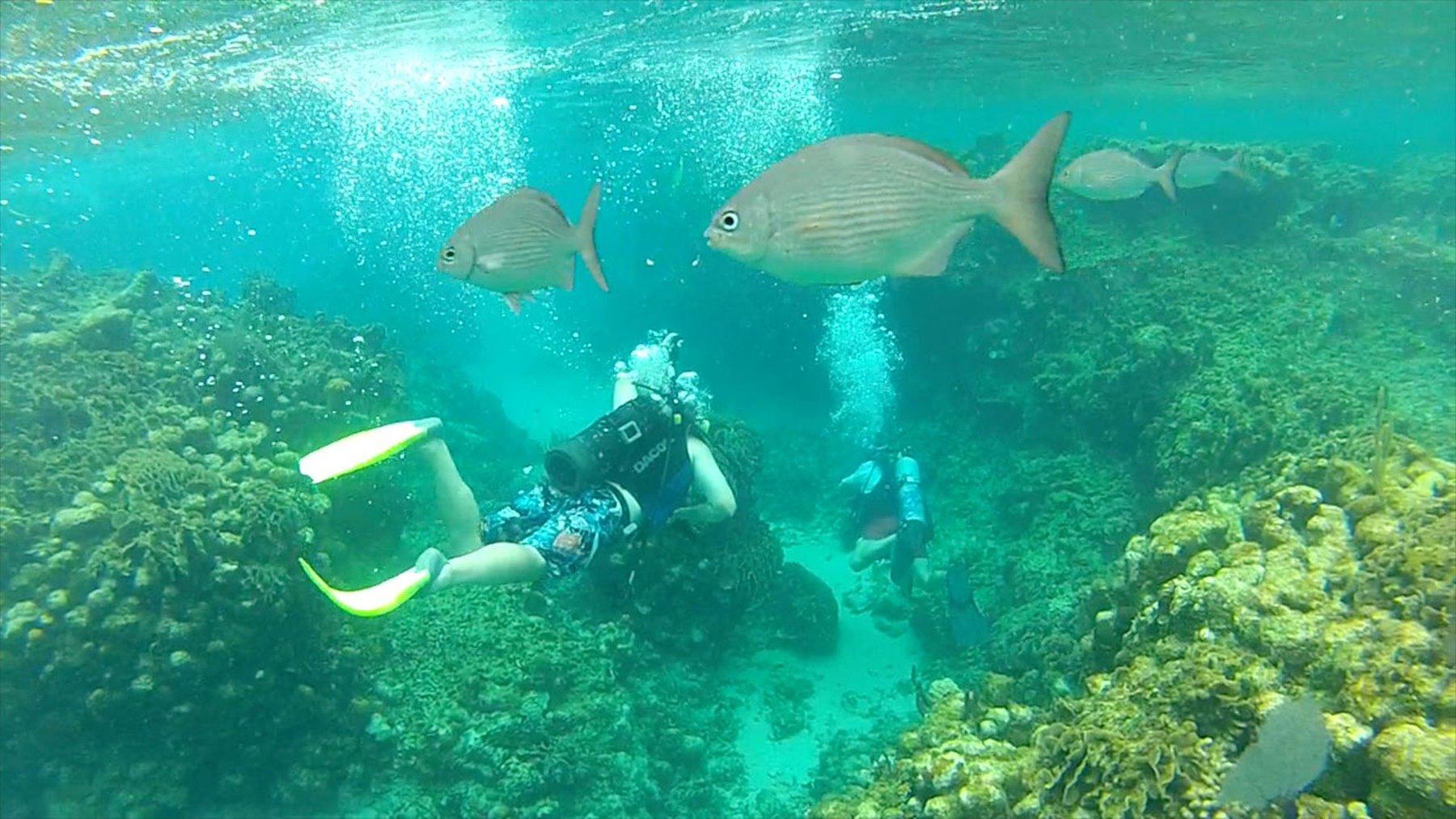 man scuba diving in the ocean