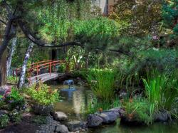 bridge over koi pond in garden