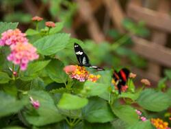 Wings of Mackinac