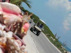 Golf cart and seashell