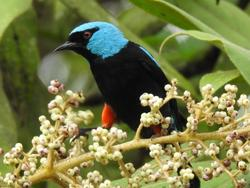 a black and blue bird on a branch
