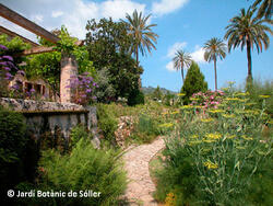 Botanischer Garten von Sóller | Mallorca