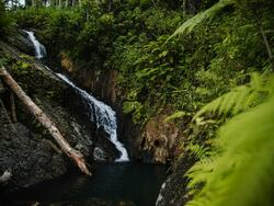 a small waterfall in the rainforest