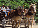 two horses pulling carriage