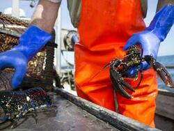 man holding lobsters