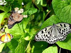 Places of Interest - Entopia By Penang Butterfly Farm