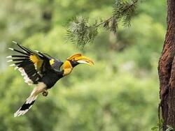 Places of Interest - Penang Bird Park