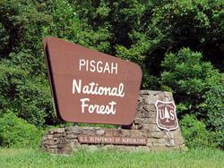 Pisgah National Forest board near Mountain Inn & Suites