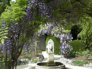 Garden with purple flowers and a fountain