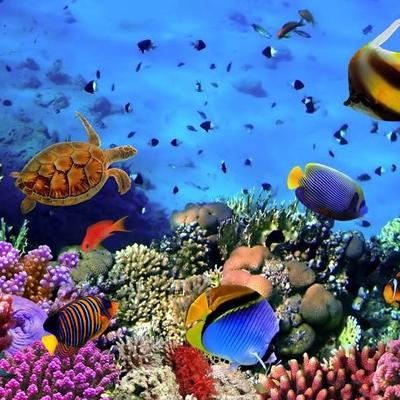 Fiji Fishes